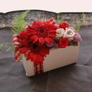 Luce Red ガーベラアレンジ[ケース入]クリスマスに♪プリザーブドフラワー