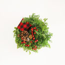 【先行予約】christmas wreath ( S-size)