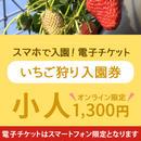☆数量限定☆いちご狩り入園券(3月11日~分) 小人(小学生) オンライン購入特典付き