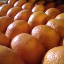 飛田柑橘園のミカン 5K