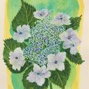「額紫陽花ー静刻」画用紙にテンペラ画