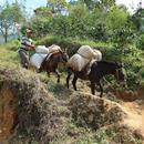 Honduras/ホンジュラス 【農園視察済】