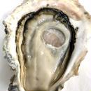 能登の岩牡蠣(石川)