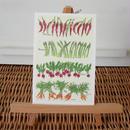 postcard / pepper asparagus radish carrot