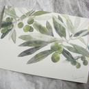 postcard / olive