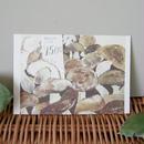 postcard / porcini