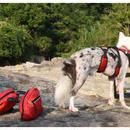 犬用 散歩サドルバッグ バックパック リュック メッシュ 通気性  サイズ選択有 希少分離可能タイプ アウトドア 旅行 キャンプ 00203
