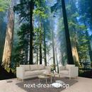 3D 壁紙 1ピース 1㎡ 自然風景 森林 幻想的 大木 インテリア 装飾 寝室 リビング h02176