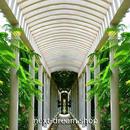3D 壁紙 玄関用 1ピース 1㎡ 自然風景 渡り廊下 庭 植物 インテリア 装飾 部屋 耐水 防湿 耐衝撃 騒音吸収 h02770