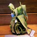 チランジア / ストレプトフィラ カーリータイプ (T.streptophylla) ★12/6企画