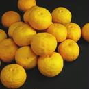 天空の黄柚子 1.5kg