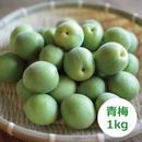 HOMEMAKERS 青梅 小豆島産 1kg
