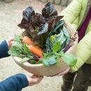 【1回分】小豆島内直接お渡し HOMEMAKERS旬野菜セット