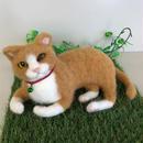 まったり茶白猫☆