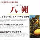 食べやすく、美味しい最高の和歌山県産柑橘「はっさく(八朔):秀品」贈答品5Kg/箱【送料無料】