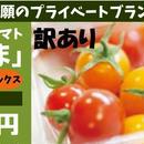 栄養こだわり野菜「にこトマト:ミニトマトMIX(赤/黄)【訳あり】業務用1Kg/箱」