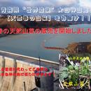 津軽白神山麓【天然山菜】こごみ300g:2017年度産先行予約(期間限定販売)