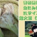 青森県田子産にんにく「生」2Lサイズ/超大玉(500g)