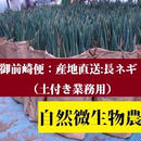 御前崎便:産地直送【ありがとう長ネギ】(土付き業務用)約10kg~/箱