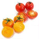 贈答&ギフト用「にこトマト:ミニトマト(赤/黄)150g/パック」MIX/8パック/箱