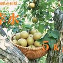 8月:【ギフト】【予約】無化学肥料栽培!宮城県産ブランド和梨(幸水)5kg:贈答品/送料無料