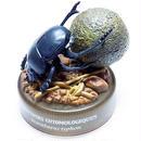 ファーブル昆虫記 01.聖なる昆虫ヒジリタマオシコガネ