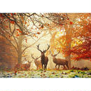 Stags : Magic Forests - 29805