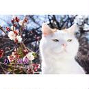 かご猫展:かご猫シロと季節のなかで