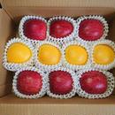 先行予約受付中【りんご3kg】食べ比べセット ※10月末より順次発送