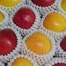 先行予約受付中【りんご5kg】食べ比べセット ※10月末より順次発送