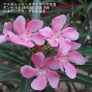 スマナサーラ長老のダンマパダ講義 046(MP3音声)