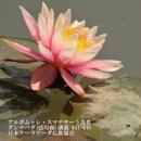 スマナサーラ長老のダンマパダ講義 047-048(MP3音声)