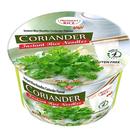 President Rice Pho Coriander Rice noodle プレジデントライス フォー パクチー (コリアンダー)