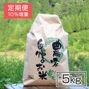 【定期便】毎日精米!半分のハーフサイズ・おいしいコシヒカリ 5kg(+10%増量)