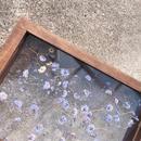 clear bloom purple S