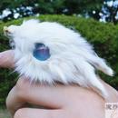 子ウサギの指輪