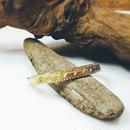 真鍮 バングル リーフ柄 サイドカット入 メンズサイズ