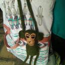 アニマリート mono verde