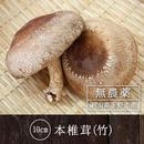 【3月13日収穫予定】10cm以上の大きな本椎茸(竹)2枚セット