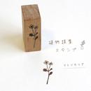 植物採集スタンプ:7『マトリカリア』