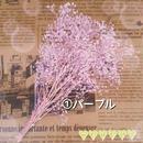 花材 プリザーブド 小花 ソフトミニカスミ草【4g】