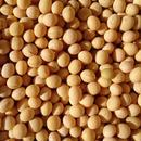 無農薬大豆トヨマサリ6Kgセット