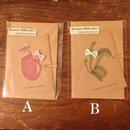 nemunoki:封筒付き 食虫植物のおめかしカード