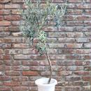 Lucca 7号鉢 no.170913-5