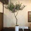 Lucca 7号鉢 no.180417-8