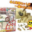 【触れる図鑑】化石発掘∫ZH-ZUK-0401∫2