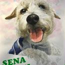 ペットの肖像画 pet portrait/ジャックラッセルテリア