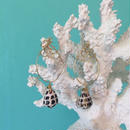 Hebrew cone shell pierced