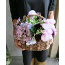 季節のお花 / Seasonal flowers