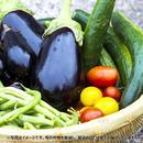 【自然栽培】季節の野菜BOX Mサイズ